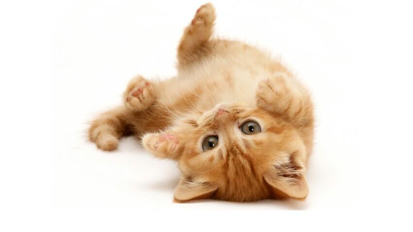Les 10 points clef d'un chat en forme