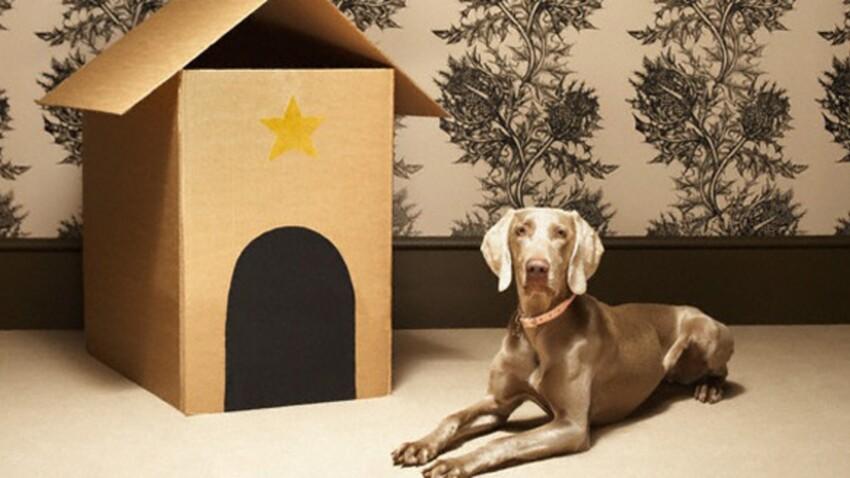 Chien et chat : comment les aider à déménager ?