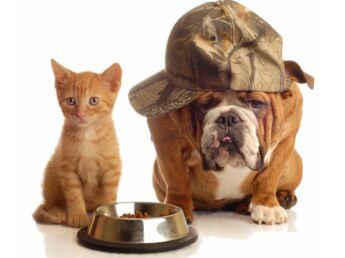 Chien ou chat : eux aussi font leur crise d'ado !
