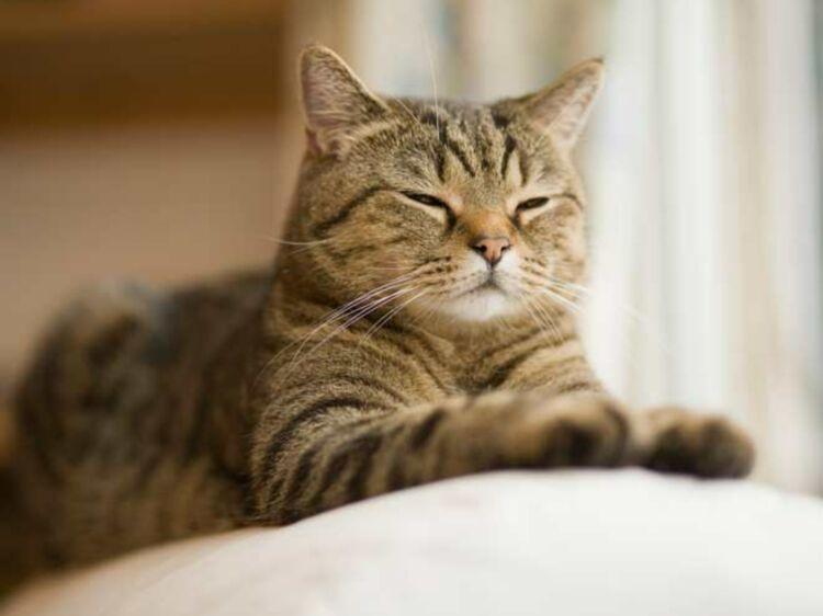 Comment couper les griffes de votre chat femme actuelle le mag - Couper les griffes d un chiot ...