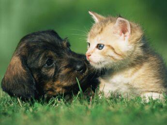 Comment traiter son animal contre les puces et les tiques ?