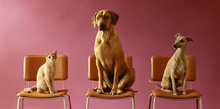 Les conseils à suivre avant d'adopter un chien ou un chat