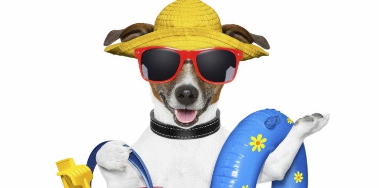 Mon chien à la plage, est-ce vraiment conseillé ?