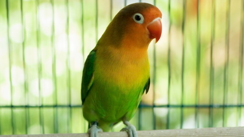 Nos conseils pour adopter un oiseau