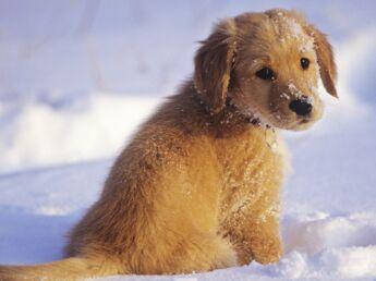 5 conseils pour partir aux sports d'hiver avec son chien