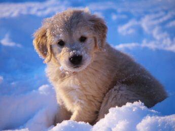 Emmenez votre chien aux sports d'hiver