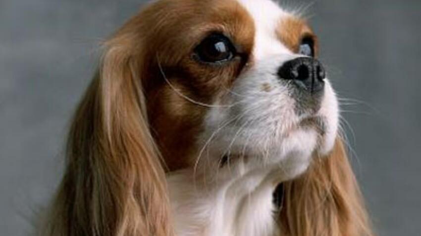Les races de chiens de A à Z