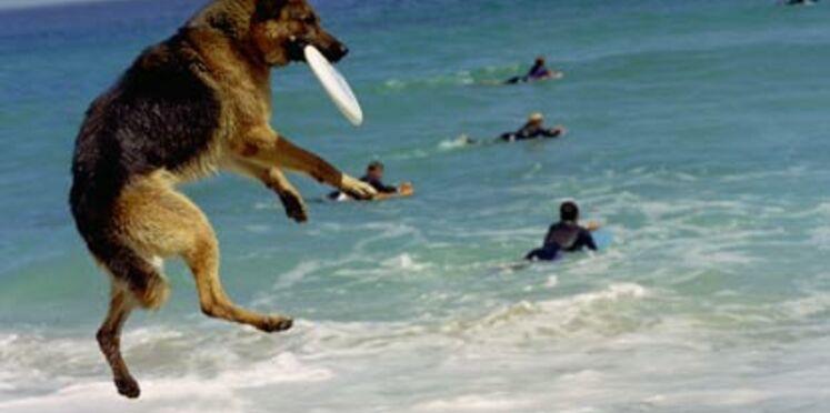 Votre chien à la plage !