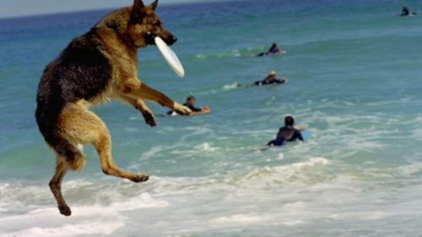 Partir en vacances  avec son animal