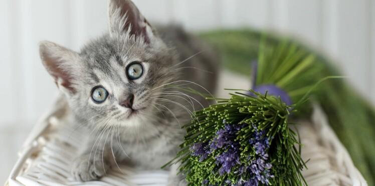 La phytho-aromathérapie pour soigner nos animaux