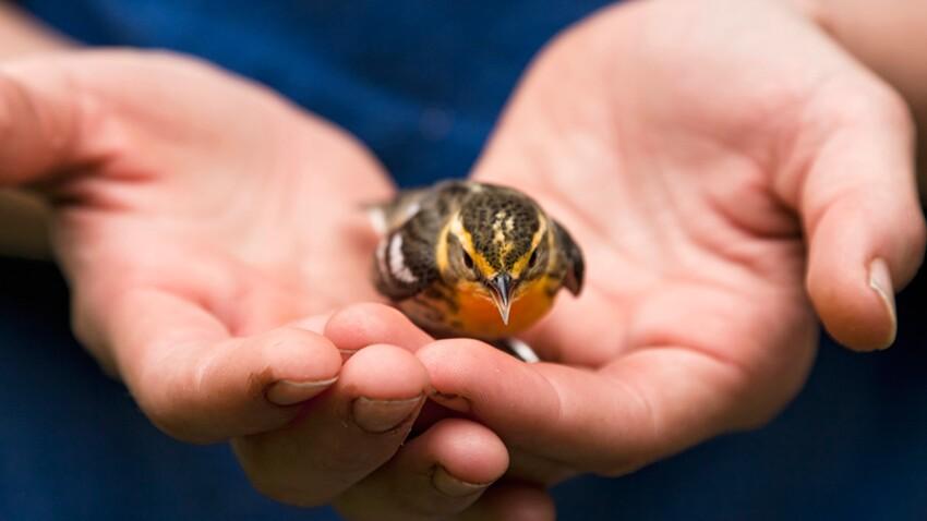Que faire si vous trouvez un oiseau blessé?
