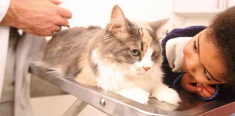 Mon chat vit en appartement, faut-il le vacciner ?