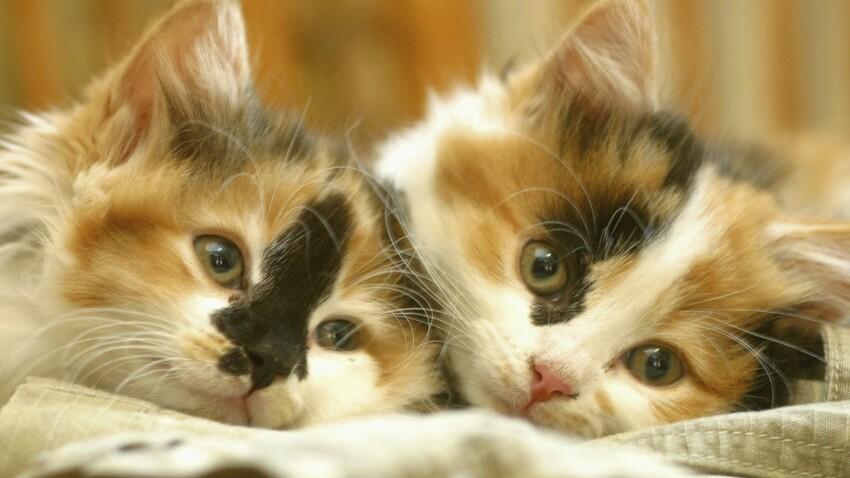 Santé de mon chaton : les conseils du vétérinaire