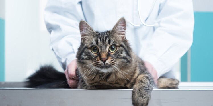 Santé du chat : comment bien choisir son vétérinaire