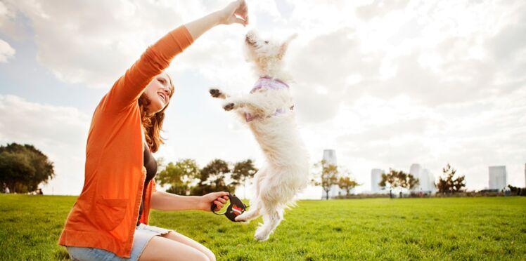 Comment dresser son chien ?