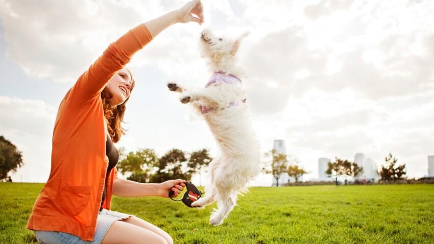 Adoptez Un Chien - 10 techniques à savoir - Éducateur canin - Tutoriel