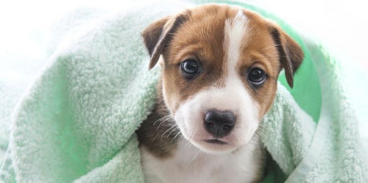 Soigner chats et chiens avec l'acupuncture