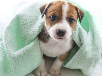 Image De Chat Et De Chien 14 sites pour faire garder chien, chat et autres animaux de