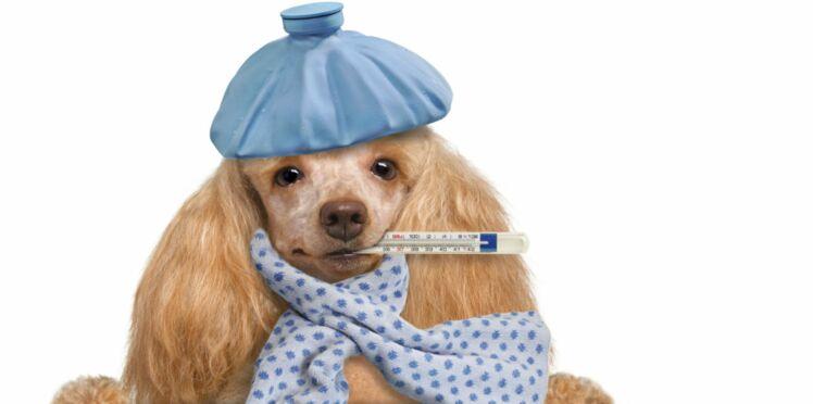 Nos conseils pour soigner son animal à l'homéopathie