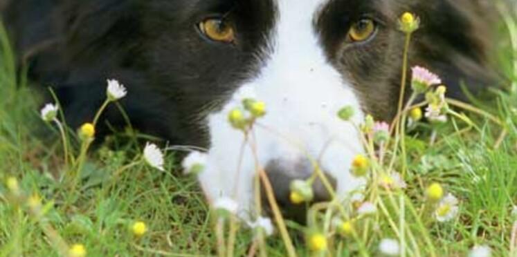 Les bons sites pour soigner votre animal au naturel