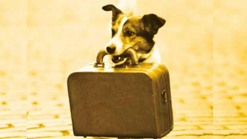 Comment éviter le stress pour un animal ?