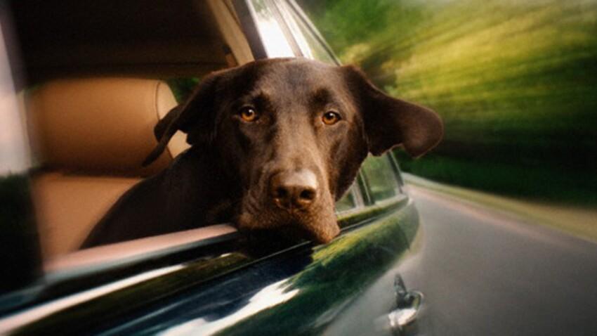 10 conseils pour un animal zen en voiture
