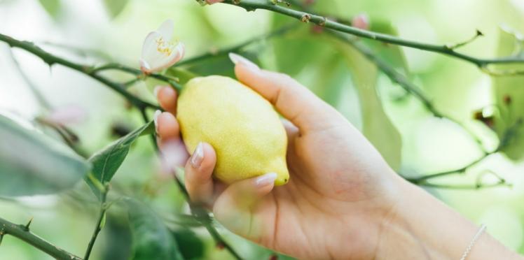 Comment avoir des ongles canons avec du citron ?
