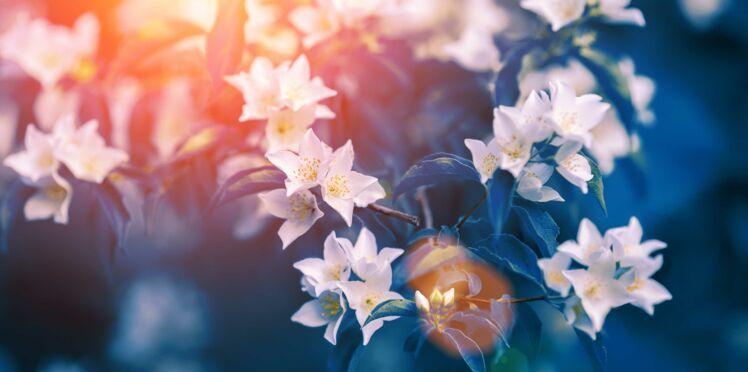 6 produits de beauté au jasmin que vous allez adorer cet été