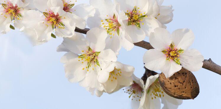 Top 10 des soins à l'amande douce que vous allez adorer