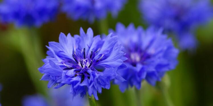 Les bonnes raisons de choisir des soins au bleuet
