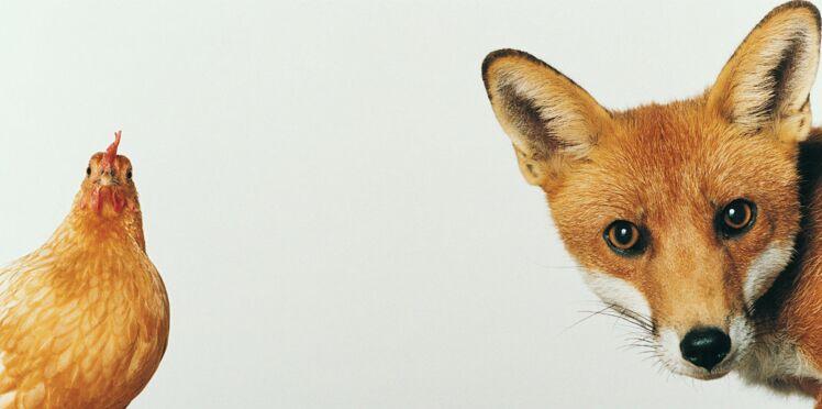 Pourquoi les animaux sont-ils souvent la cible de notre violence ?