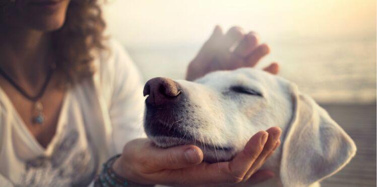 Apprendre à communiquer avec les animaux : c'est aussi un outil pour mieux se connaître
