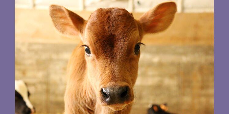 Protection animale : les députés ont voté contre, on continue le combat !