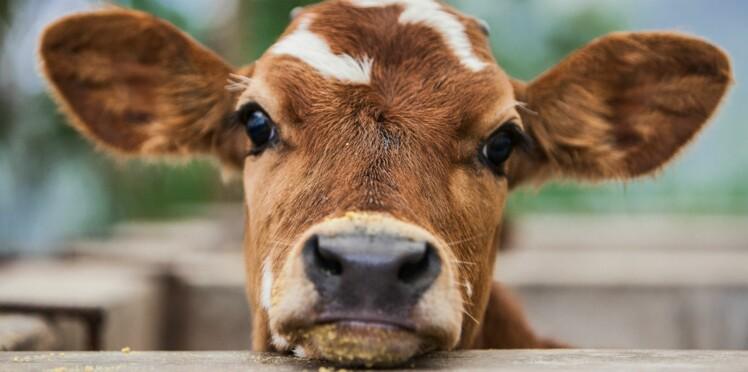 Pourquoi sommes-nous devenus si sensibles aux animaux ?
