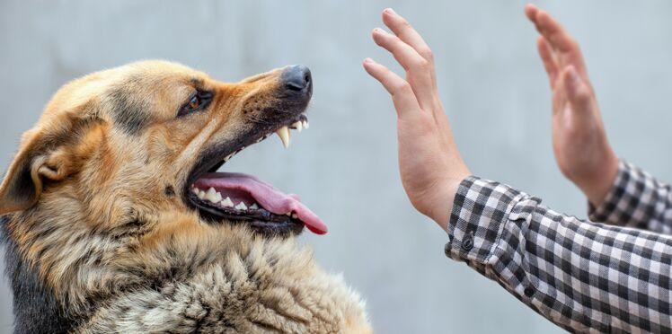 Les personnes anxieuses ont plus de risque de se faire mordre par un chien