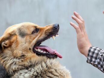 Comment faire de lui un chien en super forme : Femme