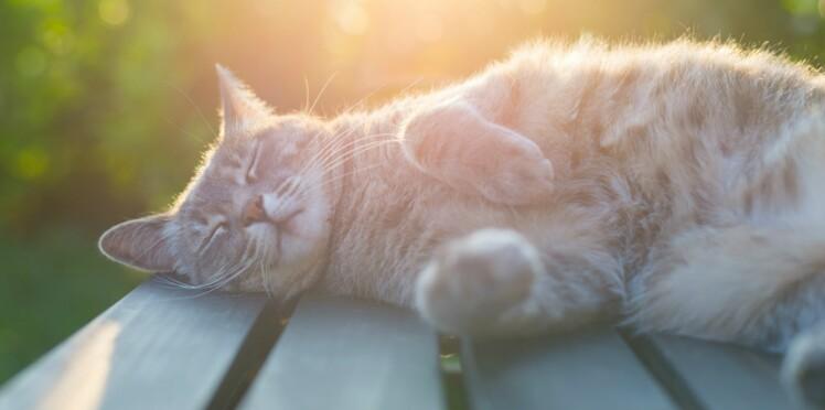 Les chats font la loi à la maison, une étude le confirme