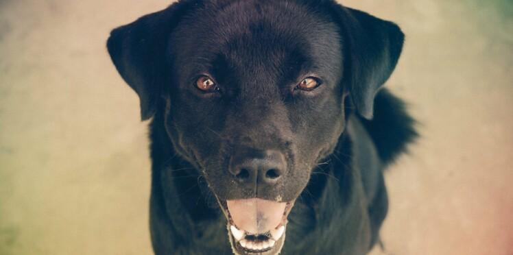 Des chiens dans les aéroports pour apaiser les voyageurs stressés