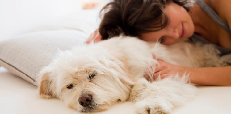Insomnies : essayez de dormir avec votre animal !