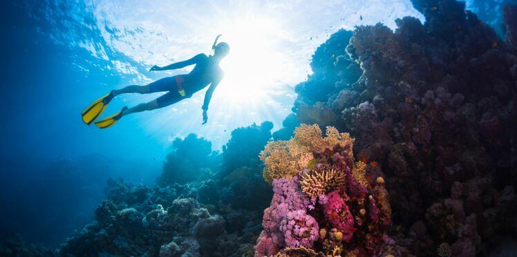 La plongée sous-marine pour soigner le traumatisme des victimes des attentats du 13 novembre
