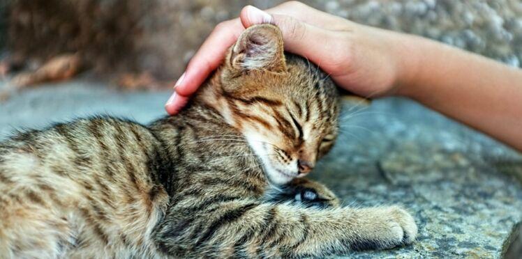 Ronronthérapie ? Même sans chat, c'est possible !