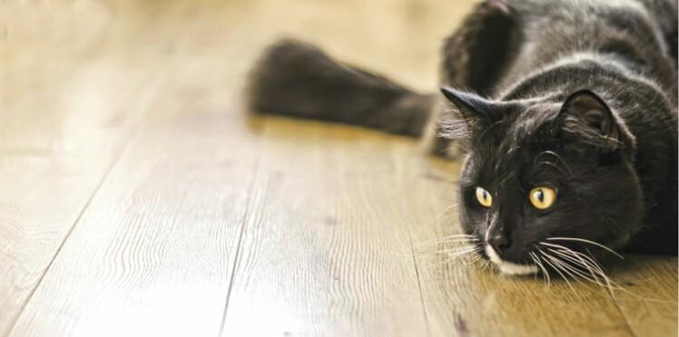 Les vidéos de chats rechargent nos batteries