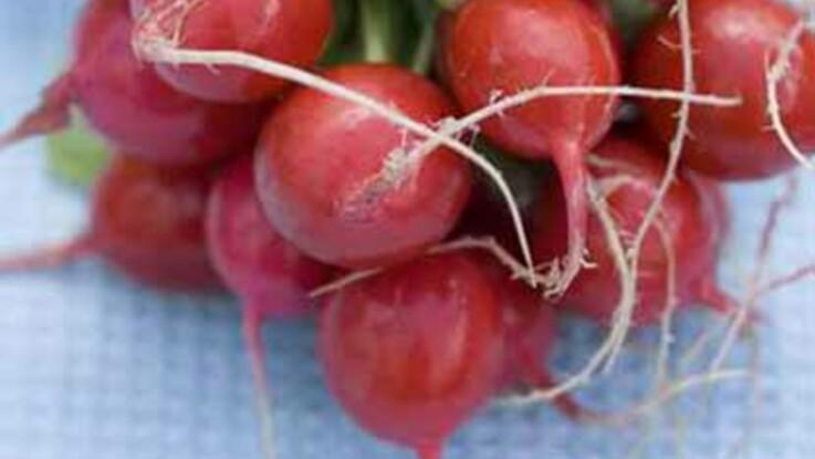 Plein de qualités, les p'tits radis roses