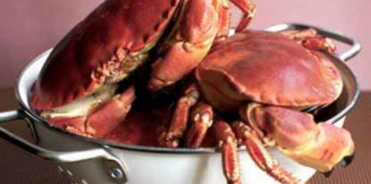 Le tourteau, gros crabe de l'Atlantique