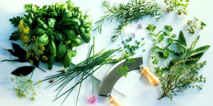 Comment bien utiliser les herbes fraîches ?