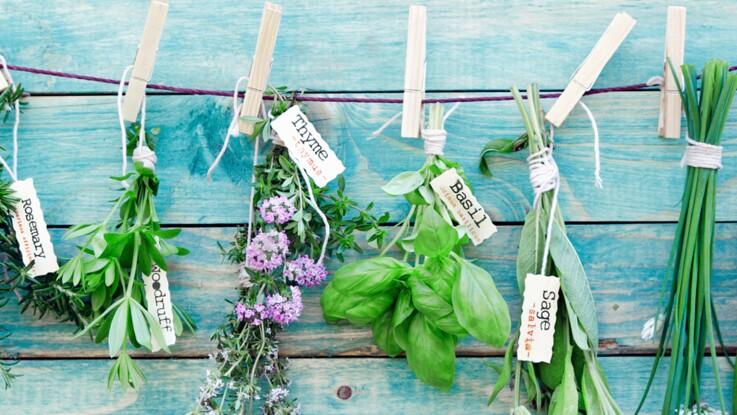 Comment conserver ses herbes aromatiques plus longtemps ?