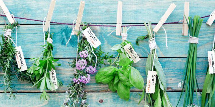 Quelles plantes aromatiques pour mon balcon ?