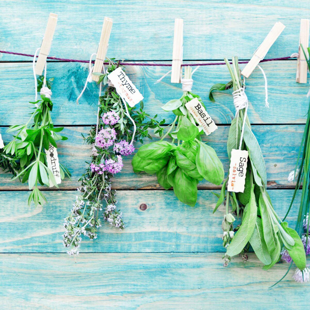 Plantes Aromatiques Sur Terrasse quelles plantes aromatiques pour mon balcon ? : femme