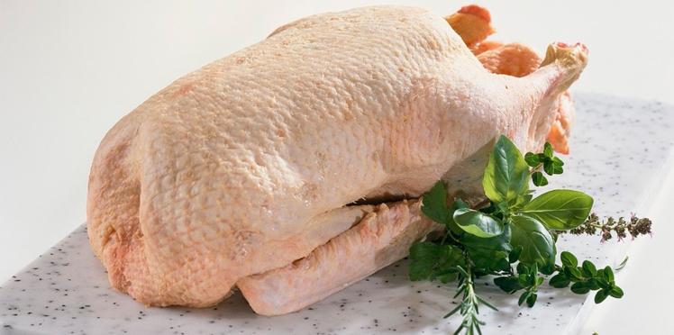 Tout savoir sur le canard