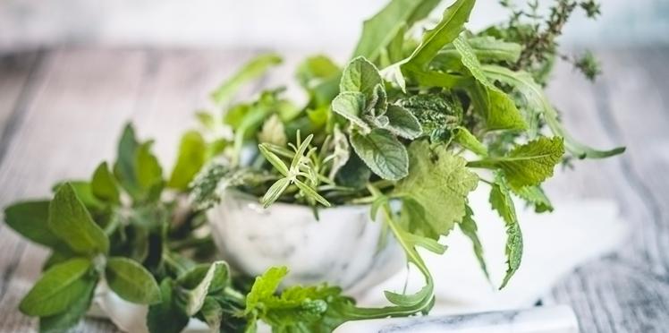 Tout savoir sur les plantes aromatiques